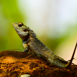 Majestic! by (GG) Girinath G - Animals Other ( lizard, nature, wildlife, nikon, insect, lens, photography )
