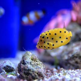Aquarium, Genova by Cristian Peša - Animals Fish