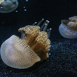 by Ivo Tunchel - Animals Sea Creatures