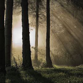 Rays by Dave Knibbs - Landscapes Forests ( england, wood, tree, trees, forest, light, mist )