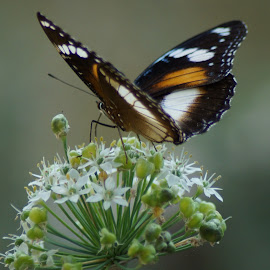 Basking by Kerry Cooper - Animals Insects & Spiders