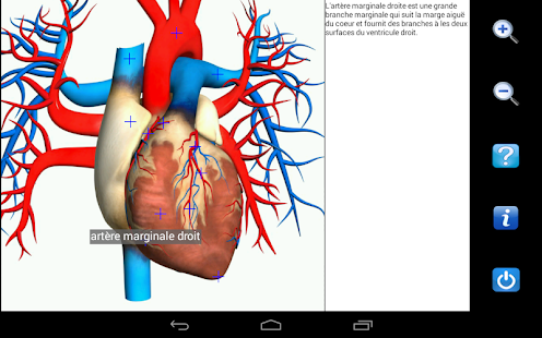 Screenshots  Visual Anatomy