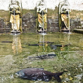Fish at Goa Gajah by Putu Purnawan - Animals Fish ( temple, bali, fish, bigfish )