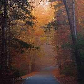 Fall  by Bob Buurman - Landscapes Forests ( fall, color, colorful, nature )
