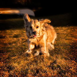 by Mikko Marttala - Animals - Dogs Running