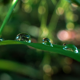 dew on grass by Asif Bora - Nature Up Close Natural Waterdrops