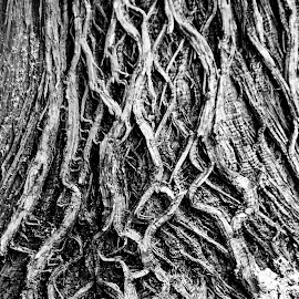 Cedar by Tammy Drombolis - Abstract Patterns