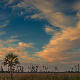 Florida Sky by Tom Moors - Landscapes Cloud Formations ( clouds, palm tree, sky, park, wetlands, sunset, florida, orlando )