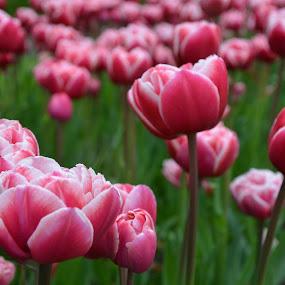 by Gobinathan Subramani - Flowers Flower Gardens