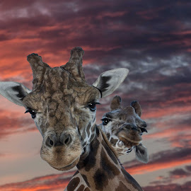 by Bruce Cramer - Animals Other Mammals (  )