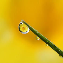 by Suhaimi Azzura - Nature Up Close Natural Waterdrops