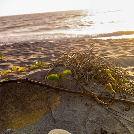 by Aires Spaethe - Nature Up Close Sand ( sand, sunset, florida, ocean, beach )