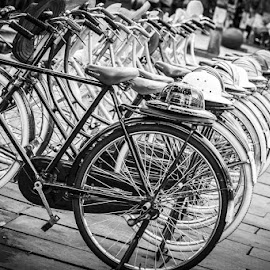 Twins by Rino Gautama - Transportation Bicycles