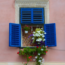 by Tatiana Alexandru - Novices Only Objects & Still Life ( blue, street, windows, flowers, sibiu )