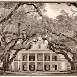 Plantation House. by Olga  Straatsma - Buildings & Architecture Homes ( tree, mansion, plantation house, louisiana, architecture, house, slavery, greek revival, plantation )