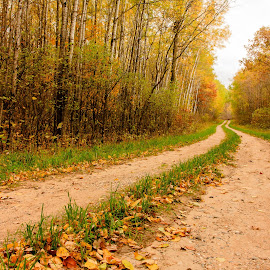 Trail in the Wilderness by Ken Brown - Landscapes Forests ( tamerac national wildlife refuge, peaceful, grass, green, forest, landscape, detroit lakes, leaves, woods, rural, country, wilderness, minnesota, nature, autumn, trail, fall, path, trees )