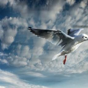 by Yuval Shlomo - Animals Birds