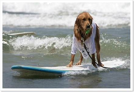 dogsurf2