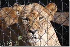 2008 Zoo 040