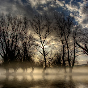 Scary forest by Boris Frković - Landscapes Waterscapes ( clouds, scary, tree, fog, forest, lake )