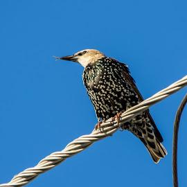 UnIdentified Bird by Robert Marquis - Animals Birds ( bird, nature, unidentified, texas, wildlife, birds )
