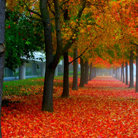 Fall at my work place by Prasanna Narayanan - Landscapes Weather