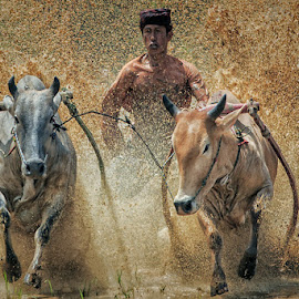 Bull Race by Bambang Pawiroredjo - Sports & Fitness Other Sports