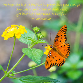 Perhaps the Butterfly is Proof  by Jennifer McWhirt - Typography Quotes & Sentences ( animals, quotes and sentences, photographybyjenmcwhirt.com, queen's butterfly, typography, insect )