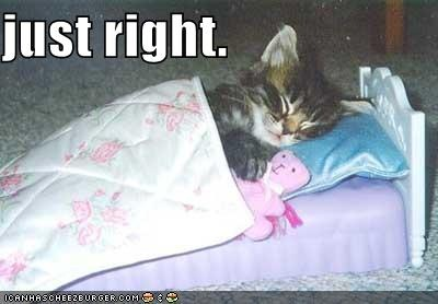 funny-pictures-kitten-sleeps-tiny-bed