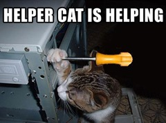 helper cat is helping lolcat