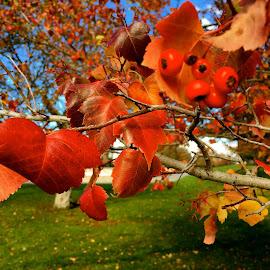 Denver Breath by Harris Kalofonos - Nature Up Close Leaves & Grasses