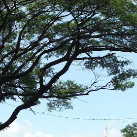 by DHika Mudi - Novices Only Flowers & Plants ( trees, fisheyes, fujifilmxp )