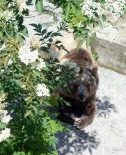 Bern-Bärengraben