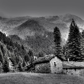 rifugio by Luna Sol - Landscapes Forests