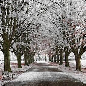Frosty avenue by Nick Holland - City,  Street & Park  Vistas