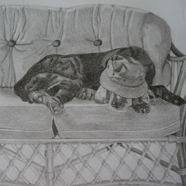 Cap Nap by Marilyn Brown - Drawing All Drawing ( asleep, dog )
