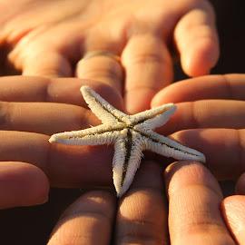 save the nature by Nalin Agarwal - Animals Sea Creatures ( environment, nature, save, hands, starfish, protect, human )