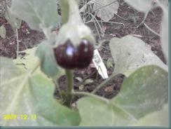 garden july 08 018