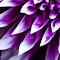 IMG_8335.jpg