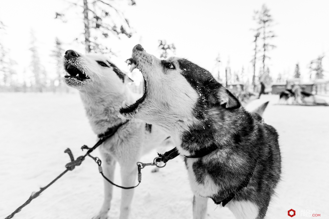 0009 - alohafred Laponie - _5E_1196