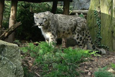 mac osx, leopard, snow leopard