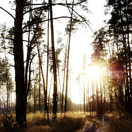 Sun in the forest by Max Feshchenko - Landscapes Travel ( tree, sunset, trees, forest, sun, path, nature, landscape )