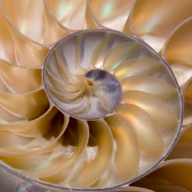 Cut Shell by Janet Marsh - Nature Up Close Other Natural Objects ( spiral, nautalus,  )