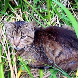 by Gabriela Dana - Animals - Cats Kittens
