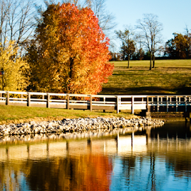 Reflections on the pond by Roxanne McCallister - Landscapes Waterscapes ( autum, red leaves, fall, reflections, pond,  )
