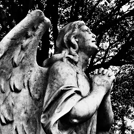 Angelus by Alfonso D.I - Buildings & Architecture Statues & Monuments ( angel, statue, black and white, praying, historical,  )