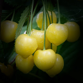 Rainy Day Cherries by Betty Arnold - Food & Drink Fruits & Vegetables ( fruit, yellow cherries, cherries )