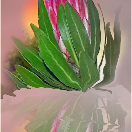 Protea by Amanda Coertze - Digital Art Abstract (  )