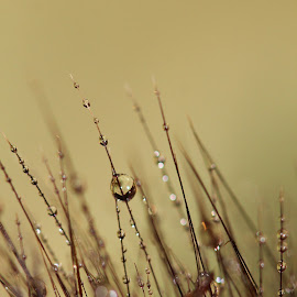 In the Grass by Janet Herman - Nature Up Close Leaves & Grasses ( grasses, blades of grass, nature, grass, dewdrops, raindrops )