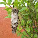 Oruga de Saquito -  Bagworm Moth